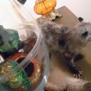 Opossum (Animals and Objects, detail), 2011
