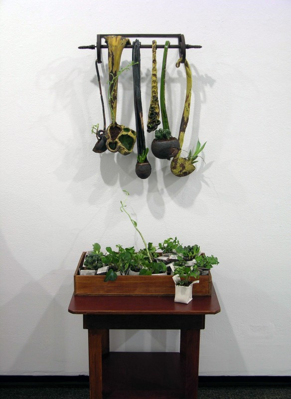 Cuttings and Seedlings Collection, 2009